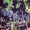 Vineyard Hike & Lunch - Oct 9